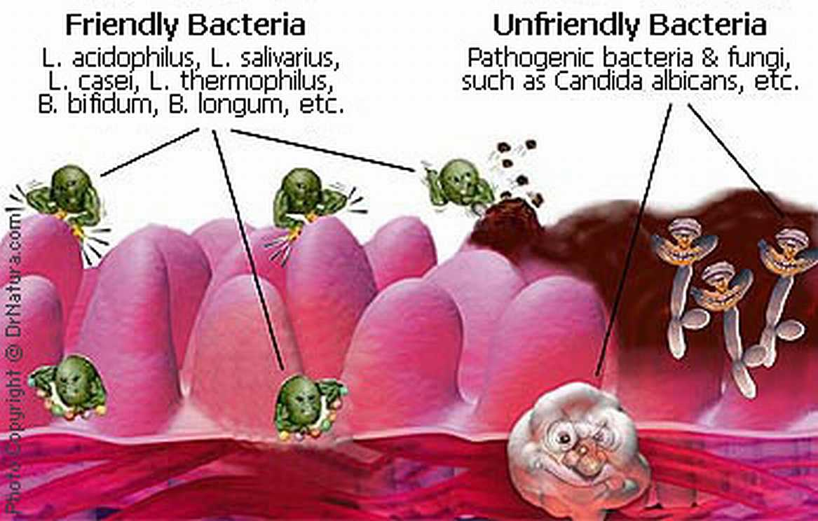 a look at bacteria and its pathogenicity A case is made that asthma has its origins in the airways a new look at the pathogenesis of asthma and respiratory viruses and certain bacteria.